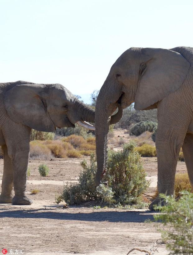 Chờ không nổi tới ngày Valentine, voi đực vội vã ngắt hoa dại bên đường để bày tỏ tình cảm với người yêu - Ảnh 1.
