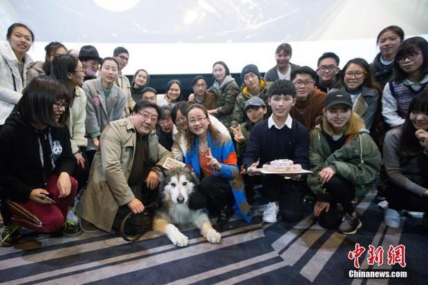 Suất chiếu phim đặc biệt dành cho chó và nguyên nhân khiến nhiều người xúc động nghẹn ngào - Ảnh 4.