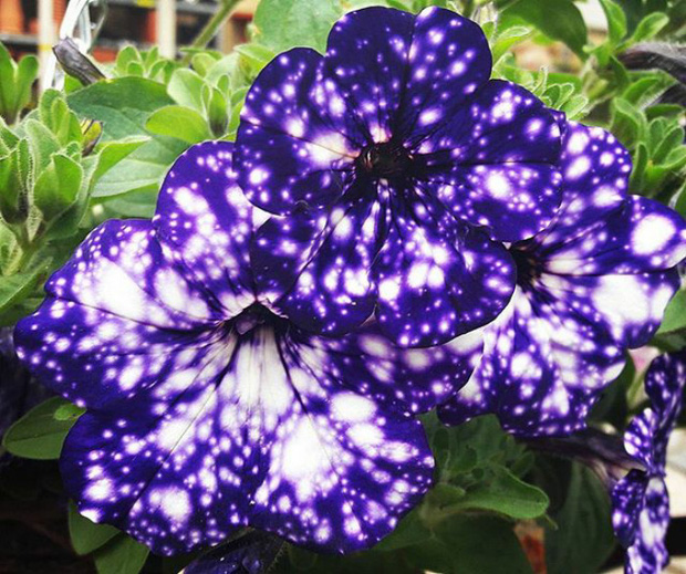 Loài hoa vi diệu như chứa cả dải thiên hà lung linh ở trong đó - Ảnh 7.