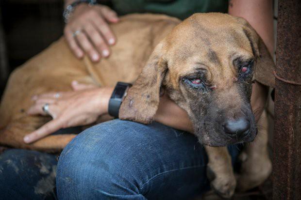 Hàn Quốc: Giải cứu thành công 149 chú chó sắp bị giết thịt mang ra chợ bán - Ảnh 4.
