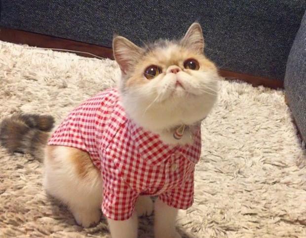 Chú mèo có bộ mặt nghiêm trọng nhất quả đất - Ảnh 7.