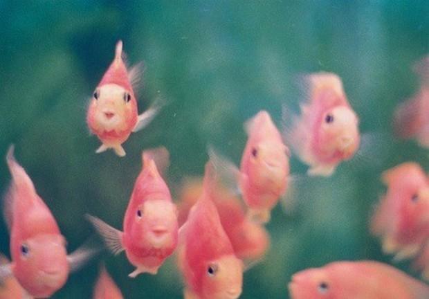 8 sinh vật biển đáng yêu hết cỡ chứng minh rằng đáy biển không chỉ có quái vật - Ảnh 6.