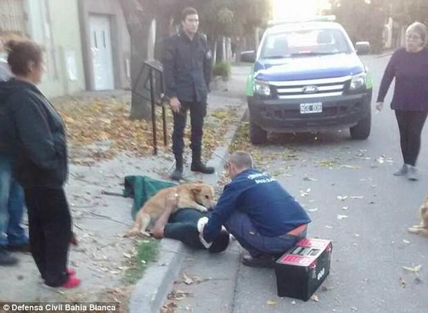 Chủ ngã cây bất tỉnh, chú chó trung thành nhất quyết ở bên không chịu rời - Ảnh 3.