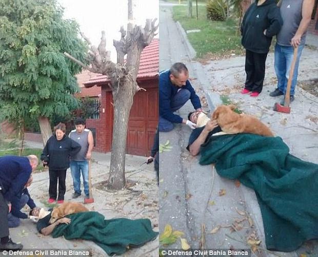 Chủ ngã cây bất tỉnh, chú chó trung thành nhất quyết ở bên không chịu rời - Ảnh 2.