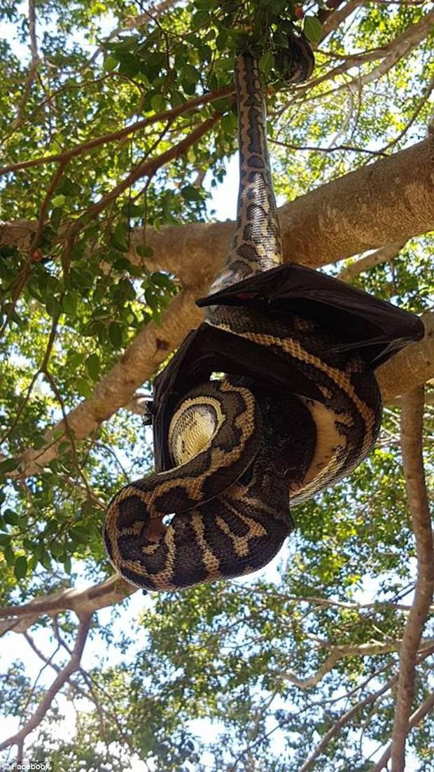 Thấy một vật đen bị treo lủng lẳng trên cây, người đàn ông ngước lên xem mới tá hỏa nhận ra cảnh tượng kinh hoàng - Ảnh 3.