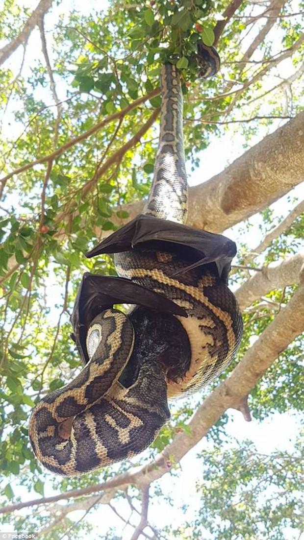 Thấy một vật đen bị treo lủng lẳng trên cây, người đàn ông ngước lên xem mới tá hỏa nhận ra cảnh tượng kinh hoàng - Ảnh 4.