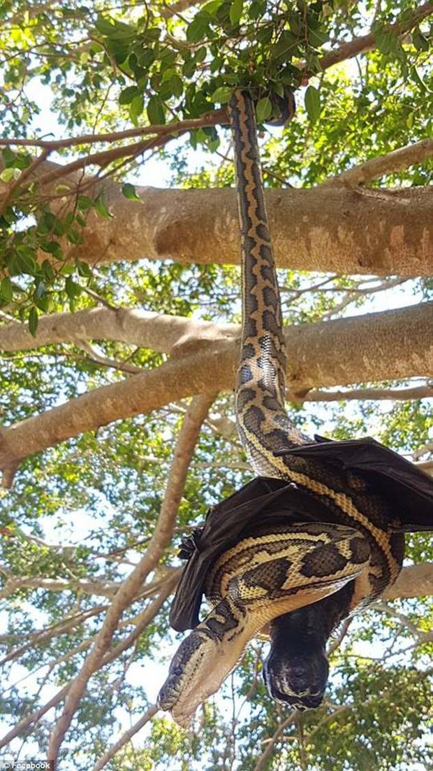 Thấy một vật đen bị treo lủng lẳng trên cây, người đàn ông ngước lên xem mới tá hỏa nhận ra cảnh tượng kinh hoàng - Ảnh 2.