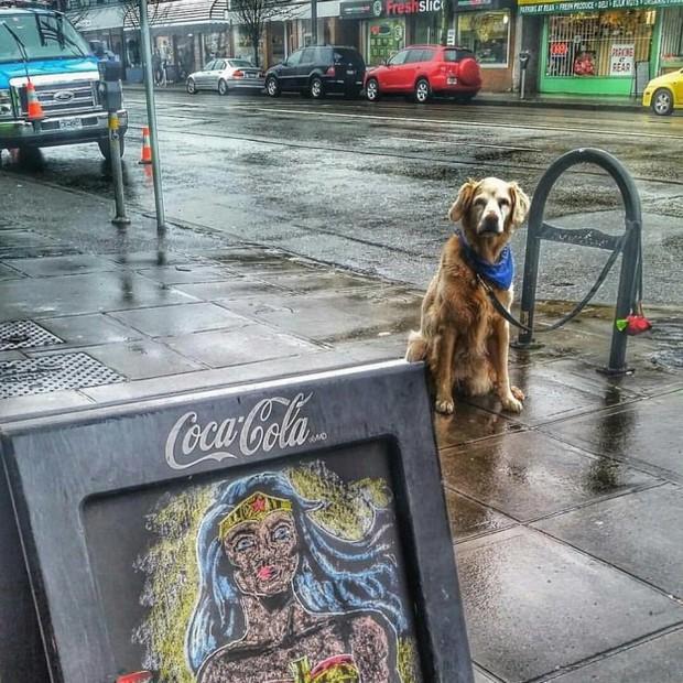 Hình ảnh những chú chó buồn bã chờ đợi chủ trên phố sẽ khiến bạn bật khóc - Ảnh 9.