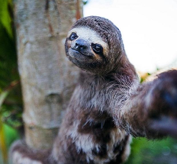 Cười nghiêng ngả với loạt ảnh tự sướng cực cool của động vật - Ảnh 9.