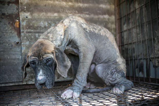 Hàn Quốc: Giải cứu thành công 149 chú chó sắp bị giết thịt mang ra chợ bán - Ảnh 5.