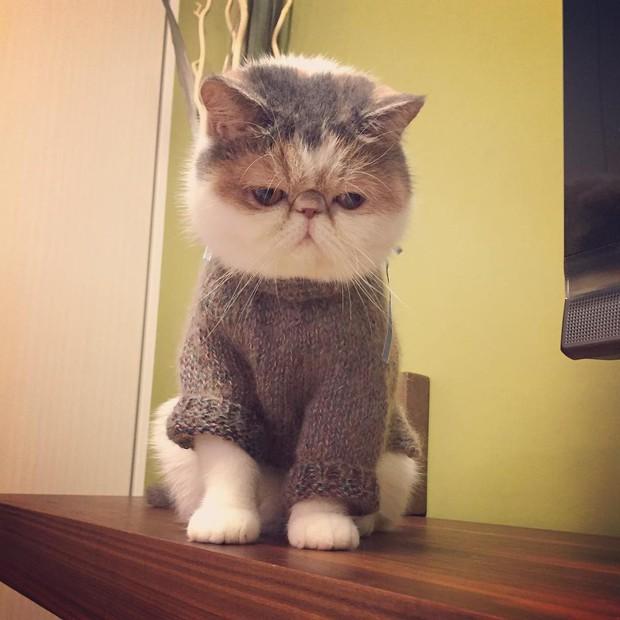 Chú mèo có bộ mặt nghiêm trọng nhất quả đất - Ảnh 9.