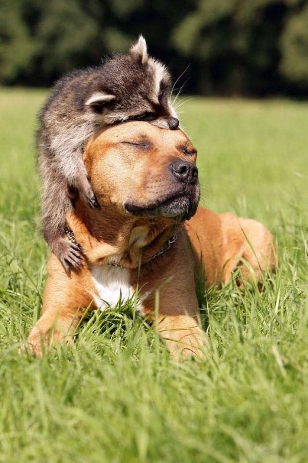 21 chú gấu mèo hiện đại là không ngại thả thính - Ảnh 3.
