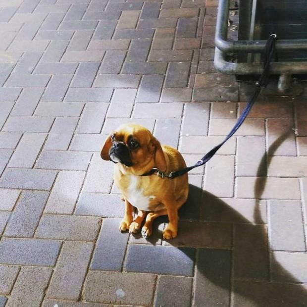 Hình ảnh những chú chó buồn bã chờ đợi chủ trên phố sẽ khiến bạn bật khóc - Ảnh 11.