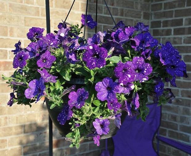 Loài hoa vi diệu như chứa cả dải thiên hà lung linh ở trong đó - Ảnh 11.