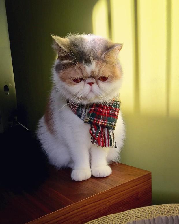Chú mèo có bộ mặt nghiêm trọng nhất quả đất - Ảnh 11.