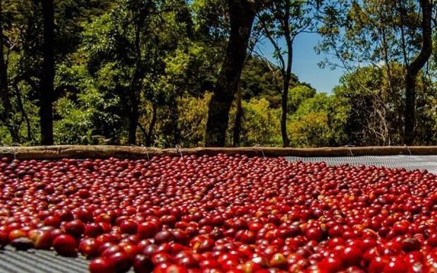 Có gì trong ly cà phê tuyệt phẩm đắt nhất thế giới với giá 1,4 triệu đồng? - Ảnh 6.