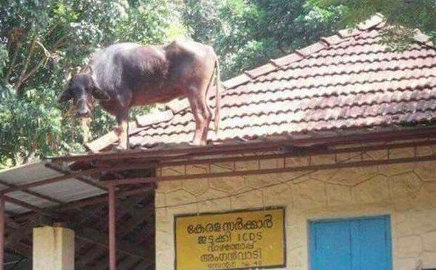 Những hình ảnh chỉ có ở Ấn Độ khiến bạn cười không nhặt được mồm - Ảnh 7.