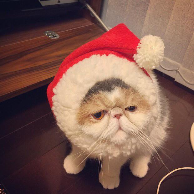 Chú mèo có bộ mặt nghiêm trọng nhất quả đất - Ảnh 13.