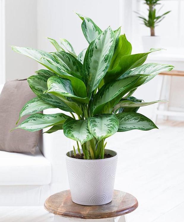 NASA khuyên trồng những loại cây này trong nhà, bạn sẽ không bao giờ bị cảm lạnh và mất ngủ nữa - Ảnh 6.