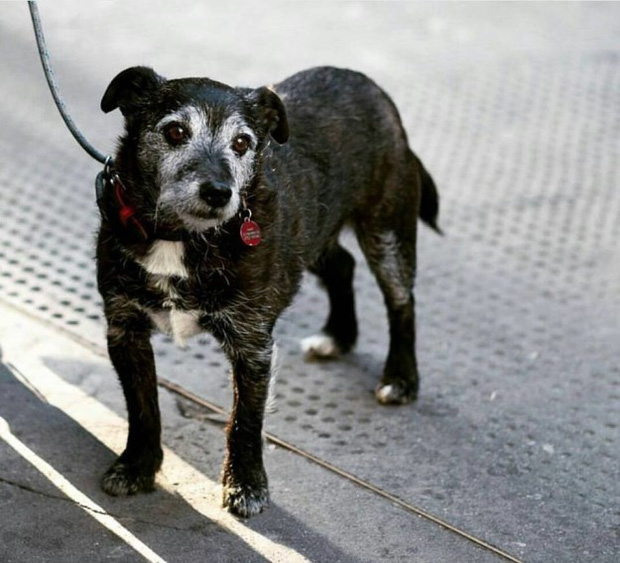Hình ảnh những chú chó buồn bã chờ đợi chủ trên phố sẽ khiến bạn bật khóc - Ảnh 15.