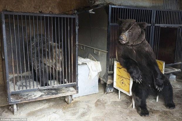 Chùm ảnh: Phía sau ánh đèn sân khấu là nỗi buồn của 2 chú gấu xiếc bị bỏ rơi - Ảnh 13.