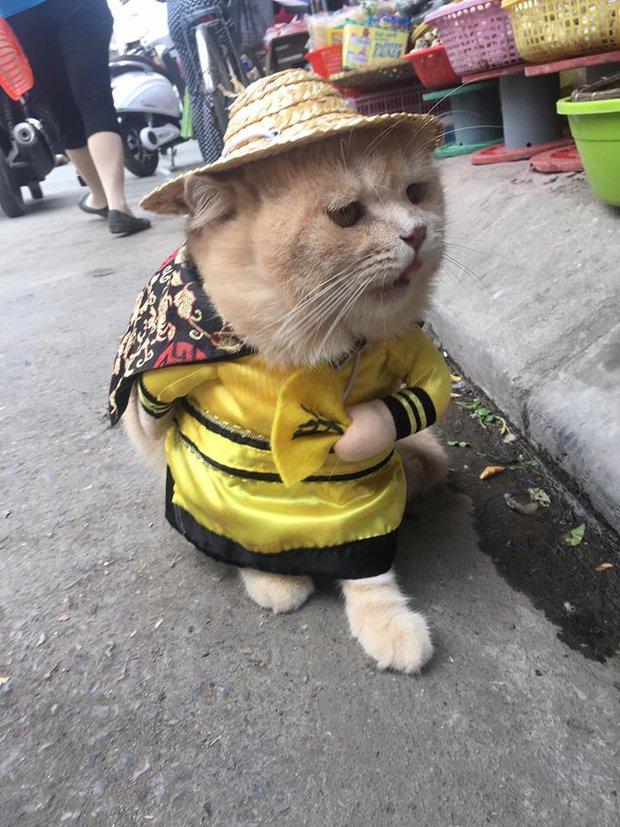 Gặp chú mèo Hoàng Thượng đi chợ vi hành, các con sen đều đứng ngồi không yên - Ảnh 1.