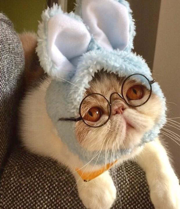 Chú mèo có bộ mặt nghiêm trọng nhất quả đất - Ảnh 15.