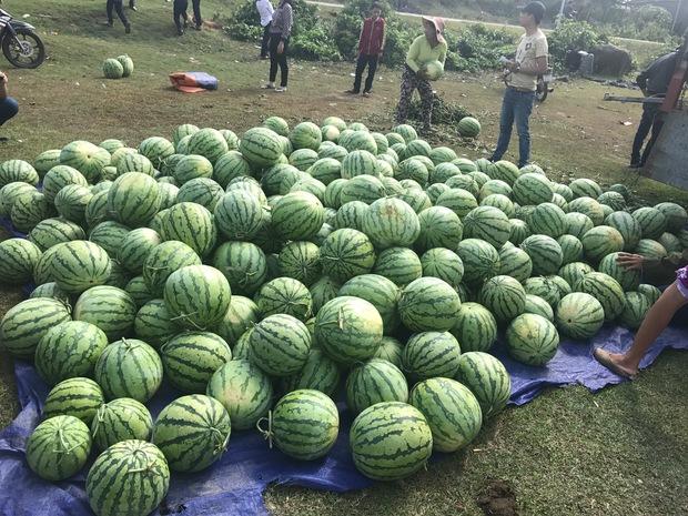 Nông dân Quảng Ngãi phải đem dưa hấu đổ cho bò ăn: Cần lắm sự chung tay giải cứu của cộng đồng - Ảnh 6.