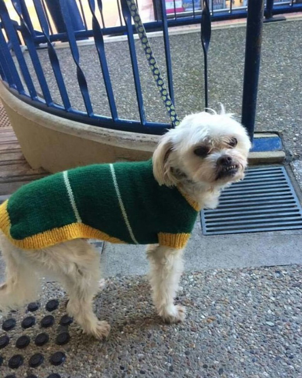 Hình ảnh những chú chó buồn bã chờ đợi chủ trên phố sẽ khiến bạn bật khóc - Ảnh 17.
