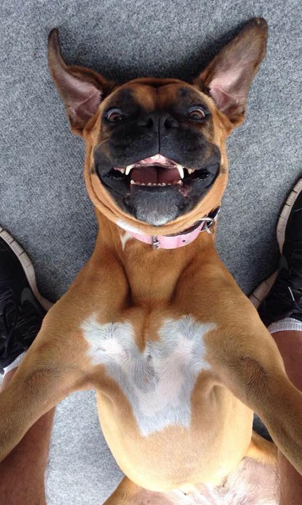 Cười nghiêng ngả với loạt ảnh tự sướng cực cool của động vật - Ảnh 17.