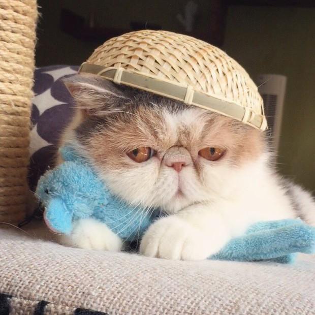 Chú mèo có bộ mặt nghiêm trọng nhất quả đất - Ảnh 17.