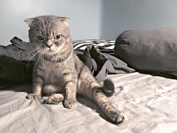 Chú mèo đã béo mặt mũi lại còn khó chịu hot nhất MXH hôm nay - Ảnh 5.