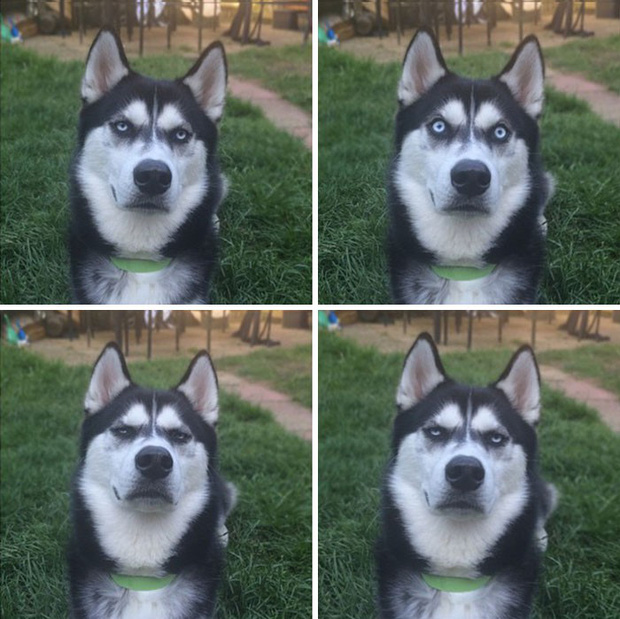 Gặp gỡ chú chó có khuôn mặt cau có nhất mùa Giáng Sinh - Ảnh 7.