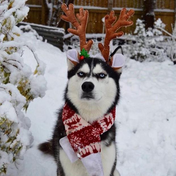 Gặp gỡ chú chó có khuôn mặt cau có nhất mùa Giáng Sinh - Ảnh 19.