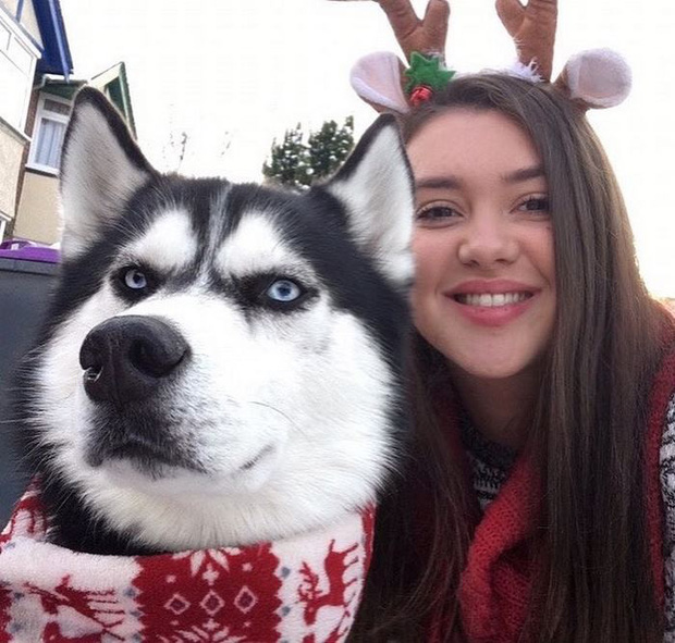 Gặp gỡ chú chó có khuôn mặt cau có nhất mùa Giáng Sinh - Ảnh 1.