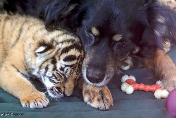 Gặp gỡ chú chó đáng yêu được mệnh danh là người cha quốc dân ở làng động vật Cincinnati (Mỹ) - Ảnh 1.