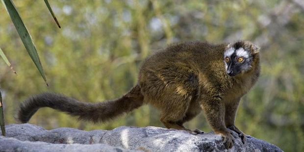 Sắp nhật thực rồi, các loài động vật này như hóa điên mỗi khi hiện tượng này xảy ra - Ảnh 4.