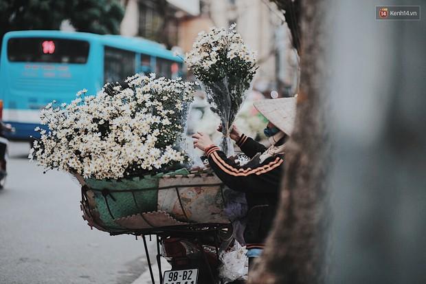 Đông về Hà Nội có mong gì đâu, chỉ chờ một mùa cúc họa mi trên phố - Ảnh 4.