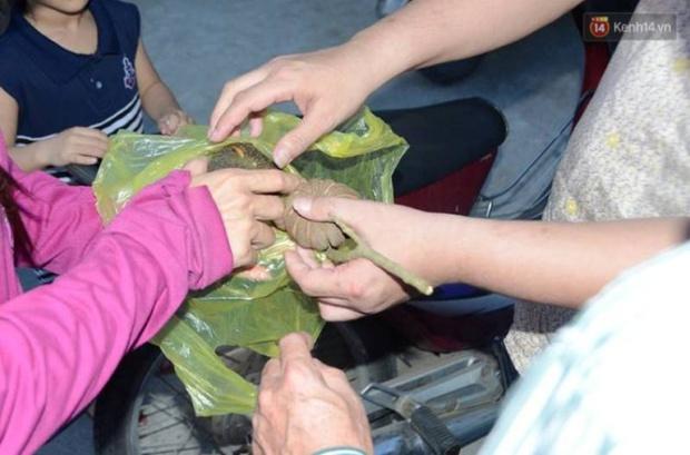 Thêm 37 học sinh ở Nghệ An ngộ độc sau khi ăn hạt quả ngô đồng - Ảnh 2.