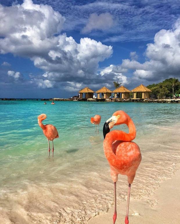 Nóng như thế này chỉ muốn đến ngay chốn thiên đường này tắm biển, chụp ảnh sống ảo cùng hồng hạc mà thôi! - Ảnh 16.
