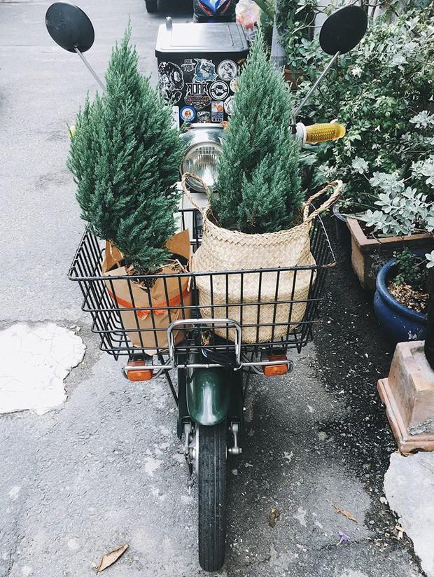 Noel năm nay, giới trẻ hai miền thi nhau mua cây tùng về chăm và chụp ảnh sống ảo - Ảnh 8.