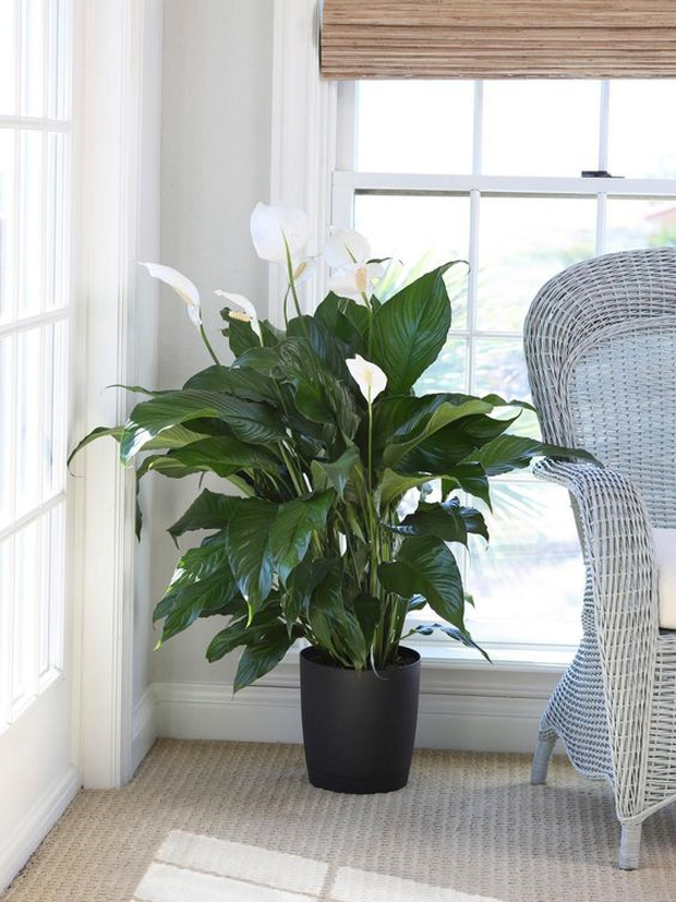 NASA khuyên trồng những loại cây này trong nhà, bạn sẽ không bao giờ bị cảm lạnh và mất ngủ nữa - Ảnh 7.
