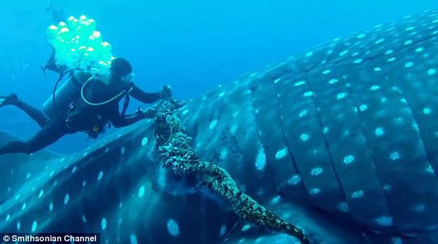 Mexico: Cá mập voi khổng lồ bị thương, tìm đến con người nhờ giúp đỡ - Ảnh 3.