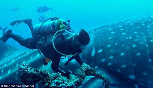 Mexico: Cá mập voi khổng lồ bị thương, tìm đến con người nhờ giúp đỡ - Ảnh 4.