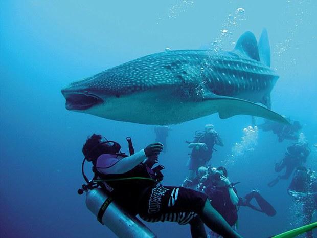 Mexico: Cá mập voi khổng lồ bị thương, tìm đến con người nhờ giúp đỡ - Ảnh 5.
