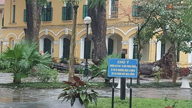 Hà Nội: Cây đổ sau mưa dông, nữ sinh trường Chu Văn An gãy cả tay chân - Ảnh 1.