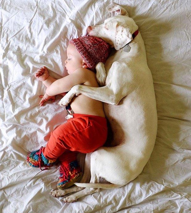 Tình bạn ấm áp của em bé và chú chó từng là nạn nhân của nạn bạo hành động vật - Ảnh 1.