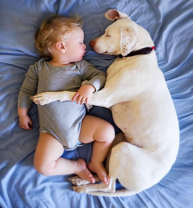 Tình bạn ấm áp của em bé và chú chó từng là nạn nhân của nạn bạo hành động vật - Ảnh 21.