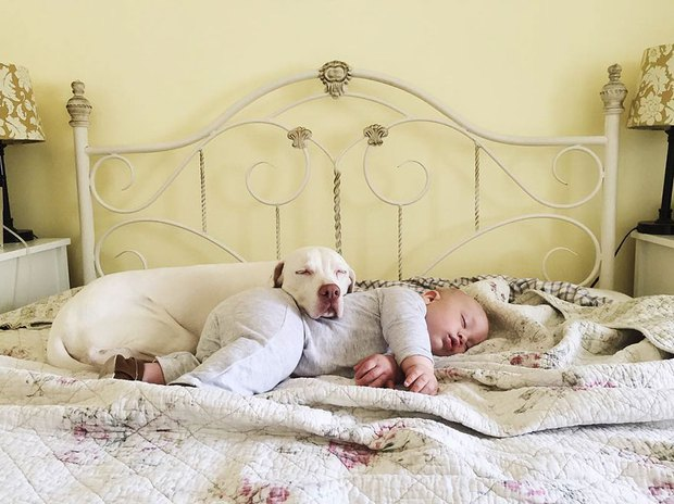 Tình bạn ấm áp của em bé và chú chó từng là nạn nhân của nạn bạo hành động vật - Ảnh 23.