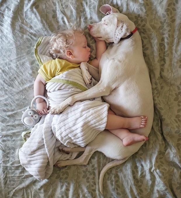 Tình bạn ấm áp của em bé và chú chó từng là nạn nhân của nạn bạo hành động vật - Ảnh 29.